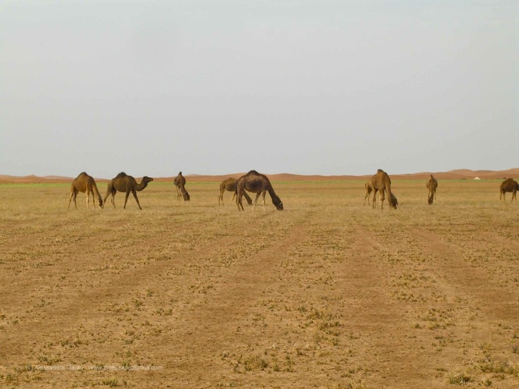 T_E_Diaries_Marocco67
