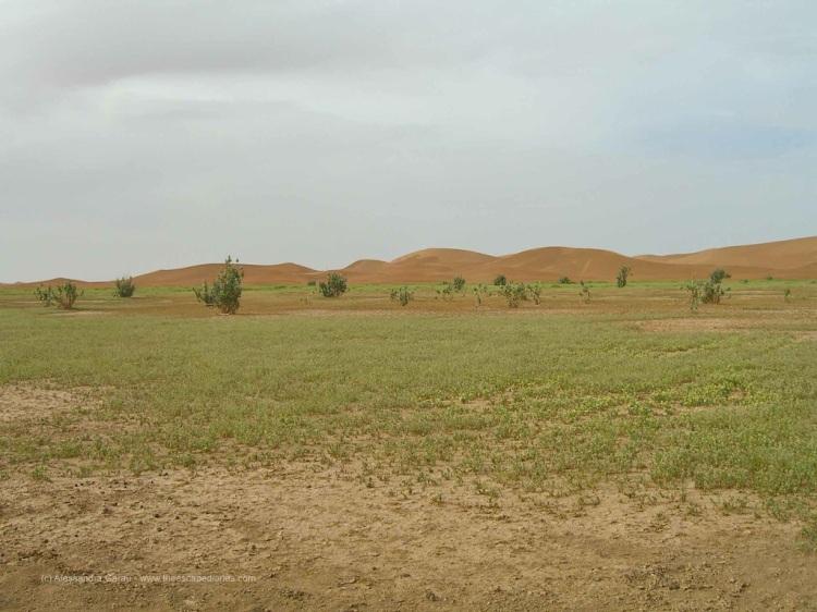 T_E_Diaries_Marocco69