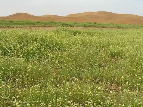Erba verde nel deserto: perché quando siamo state noi pioveva!
