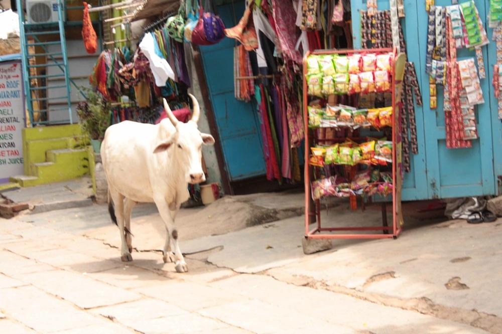 T_E_Diaries_SouthIndia32