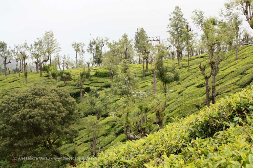 T_E_Diaries_SouthIndia84