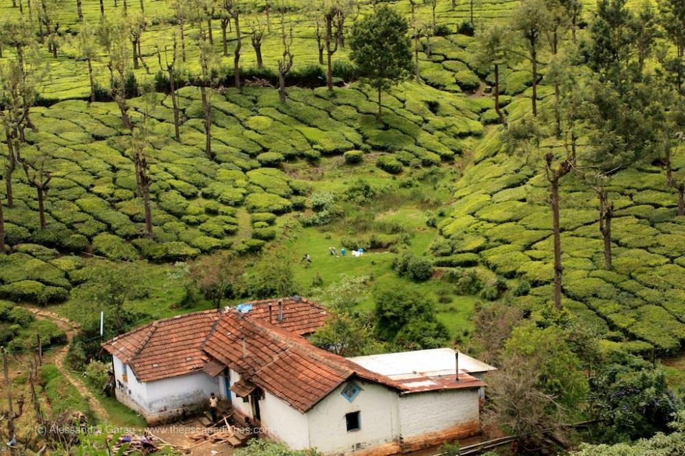 T_E_Diaries_SouthIndia86