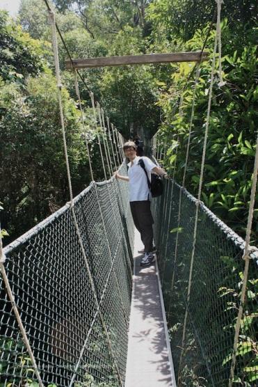 Taman Negara, il canopy walkway