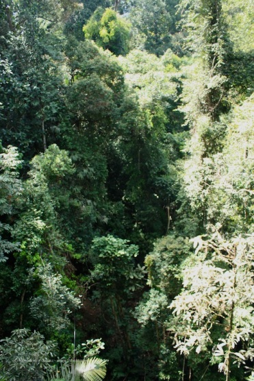 La giungla fittissima