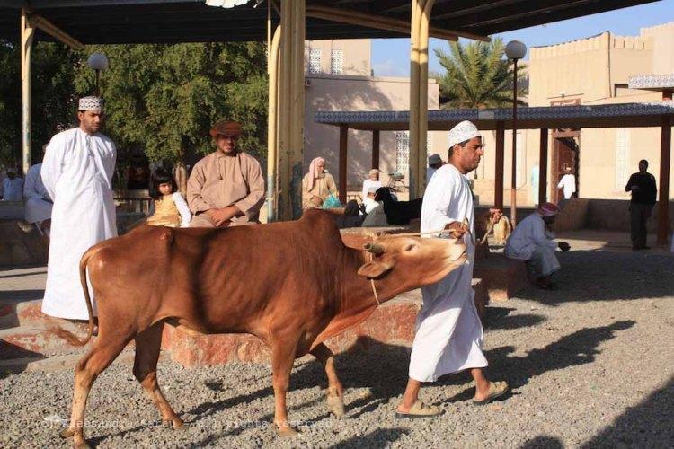 Nizwa, mercato del bestiame