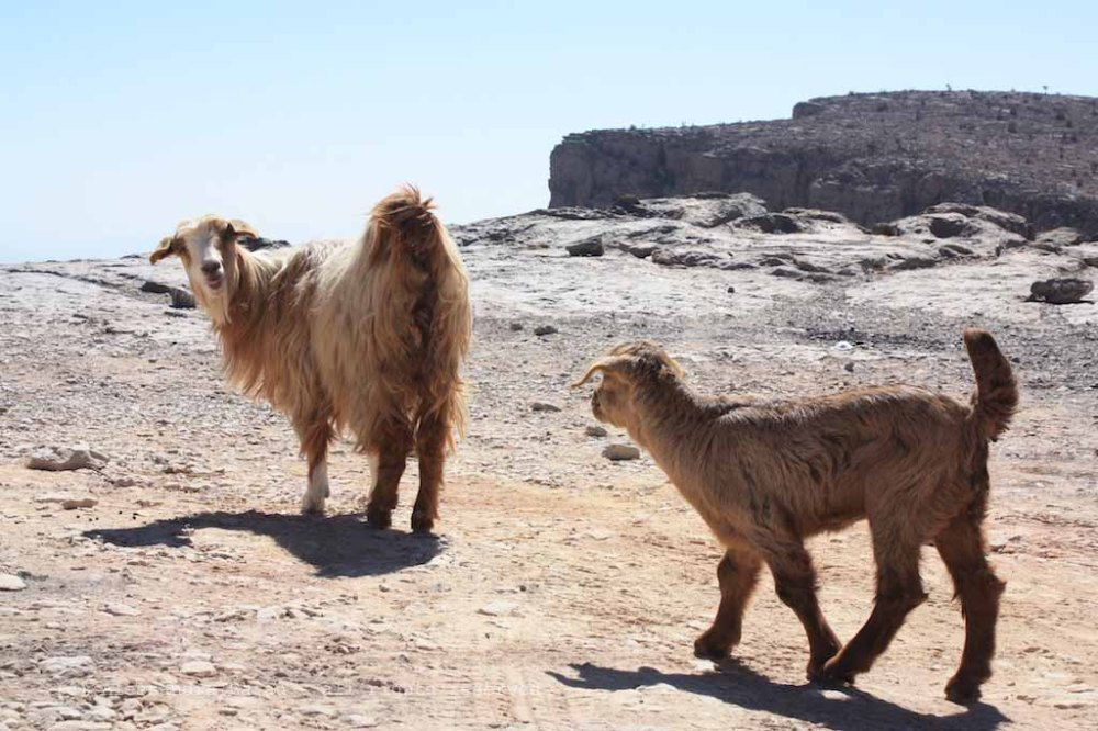 Jebel Shams, Grand Canyon d'Arabia