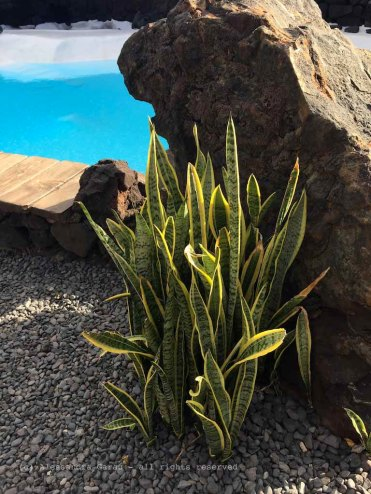 The_Escape_Diaries_canarie149