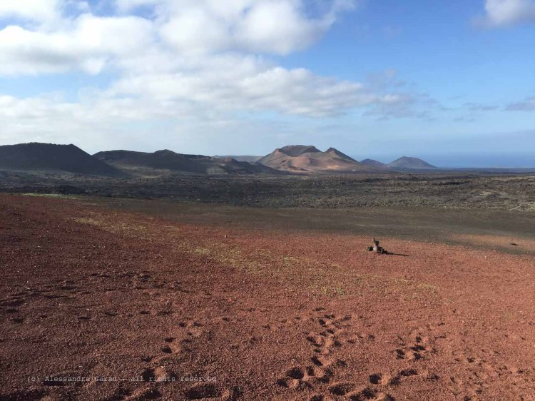 The_Escape_Diaries_canarie172