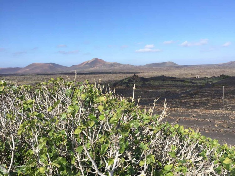 The_Escape_Diaries_canarie181