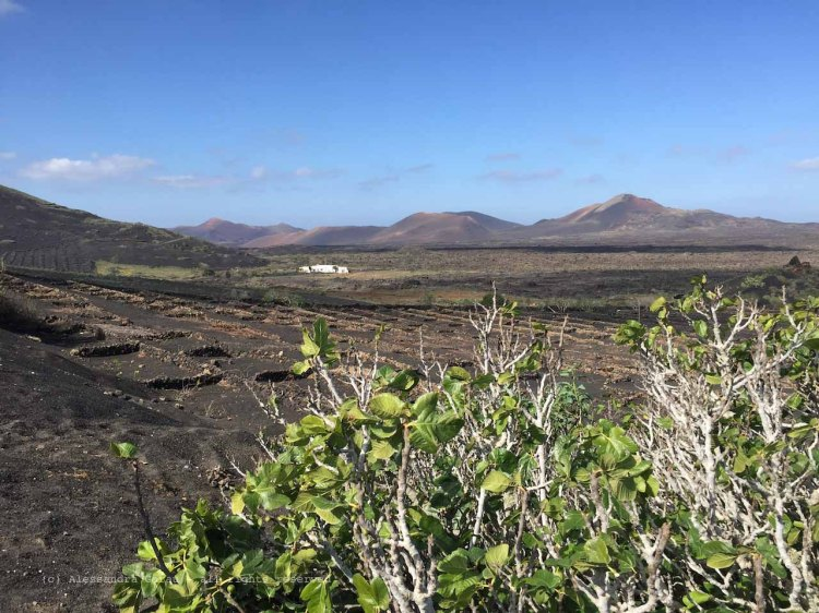 The_Escape_Diaries_canarie184