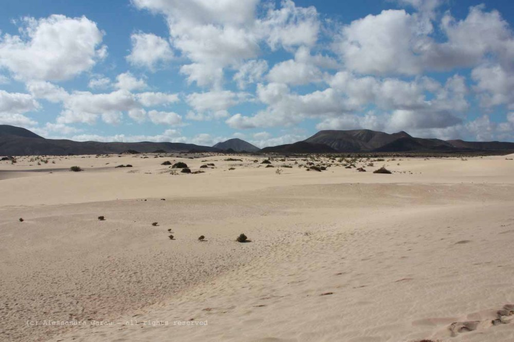 The_Escape_Diaries_canarie51