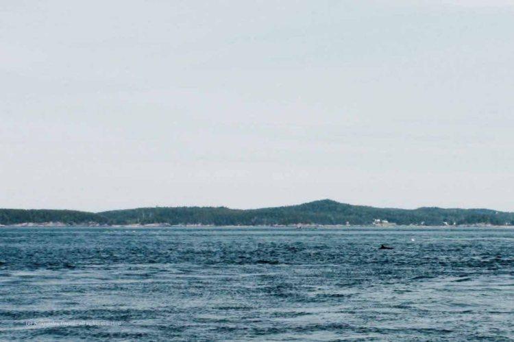 The_Escape_Diaries_Canada&Maine201