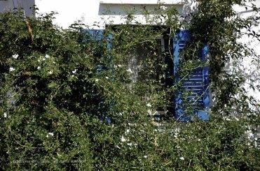 vegetazione, Sifnos