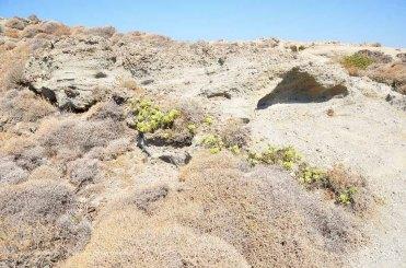 vegetazione delle Cicladi
