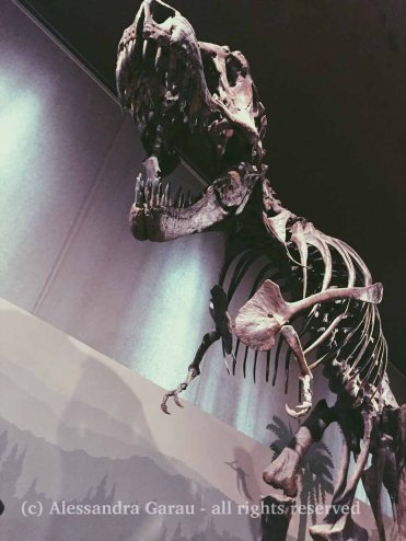 Museo di Scienze Naturali, gennaio 2018