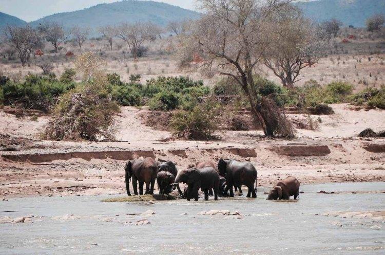 Kenya2018027